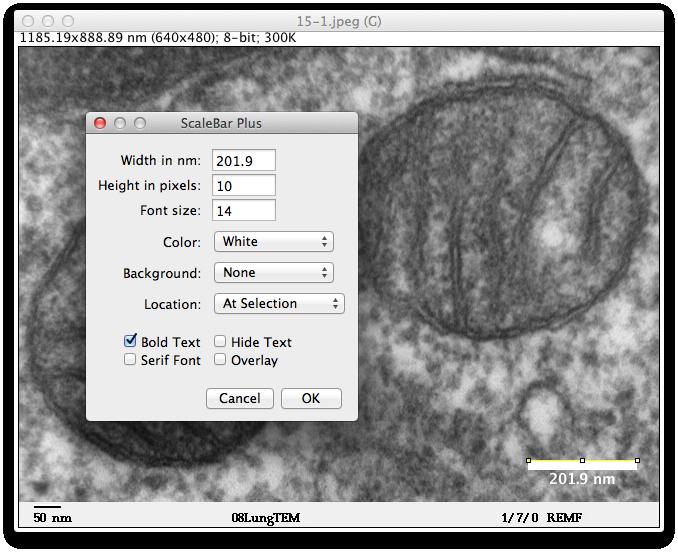 imageJで画像にスケールバーを入れる