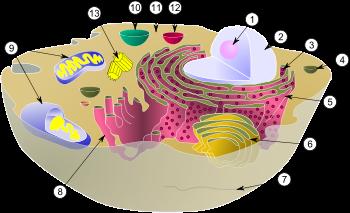 美しい細胞の世界