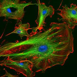 生き物の動きから微小管の機能を知る