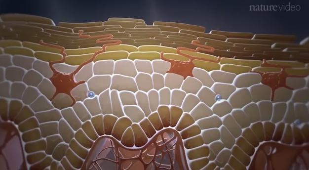 皮膚の免疫学/Immunology in the skin
