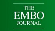 論文記載までの道のりがわかるEMBOのreview process fileの紹介