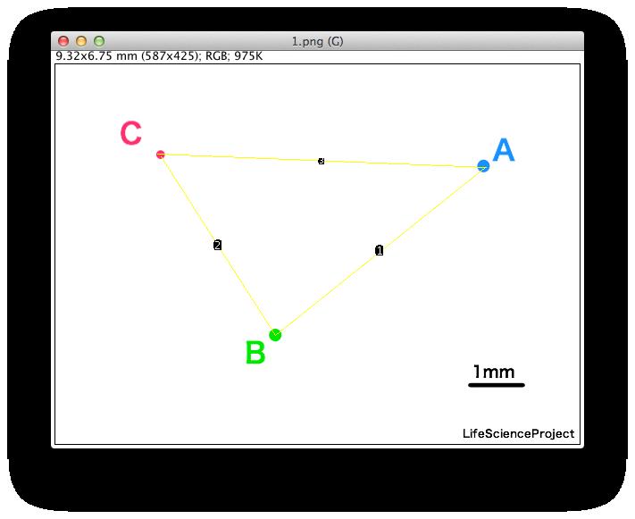 imageJで二点間の距離を測る